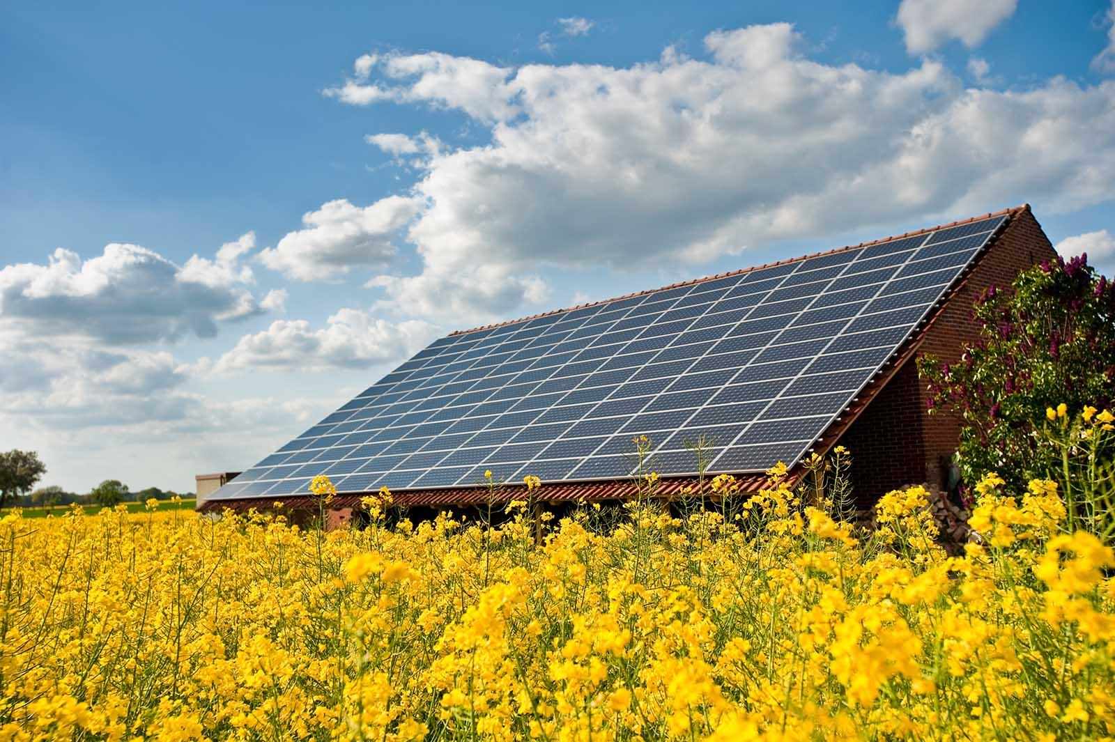 Solceller Tranås. Solpaneler på taket av en lada vid ett gult fält.