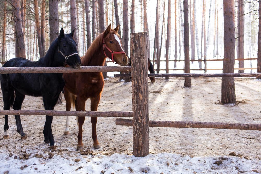 När du behöver markarbete i Stockholm till hästhage