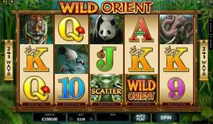 Wild Orient Slot