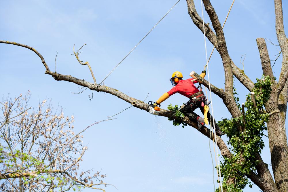 När du behöver trädfällning