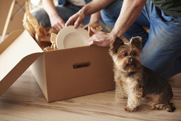 flyttkartong och hund