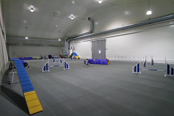hundkurs Stockholm träningssal
