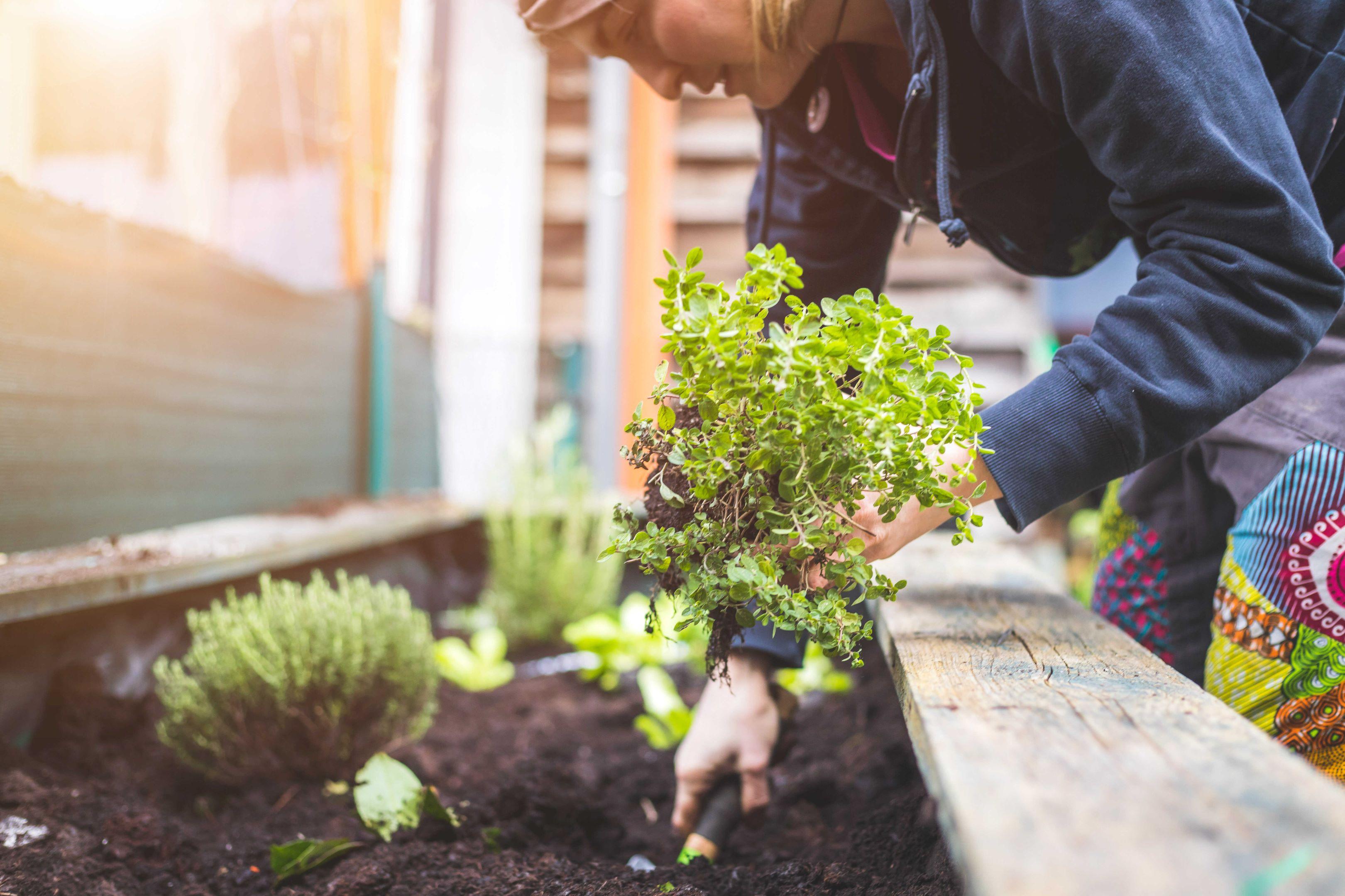 Vi sköter om er trädgård och utför innergårdsrenovering i Stockholm.