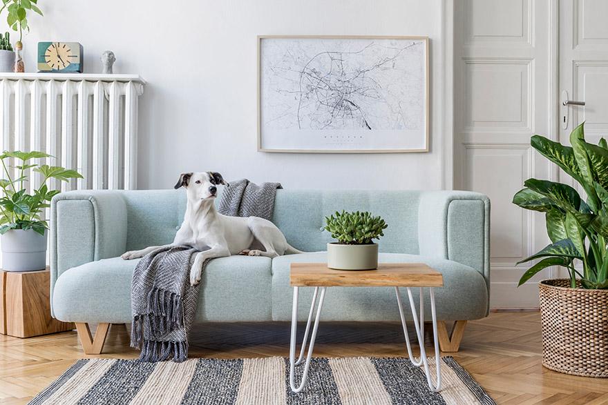Ljus och smakfullt inredd äldre lägenhet. På en mintfärgad soffa ligger en grå pläd och en vit hund.