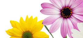 Fräscha blommor