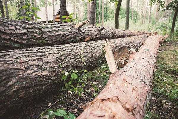 trädfällning på gång i Göteborg