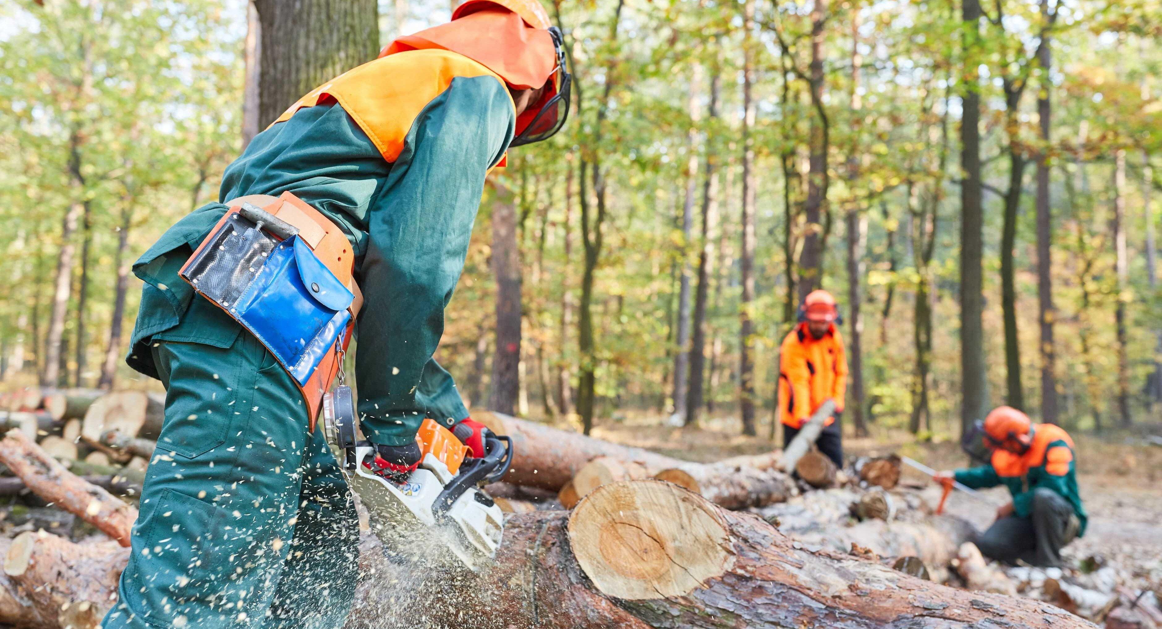 Vi fäller träd och är arborister i Norrort
