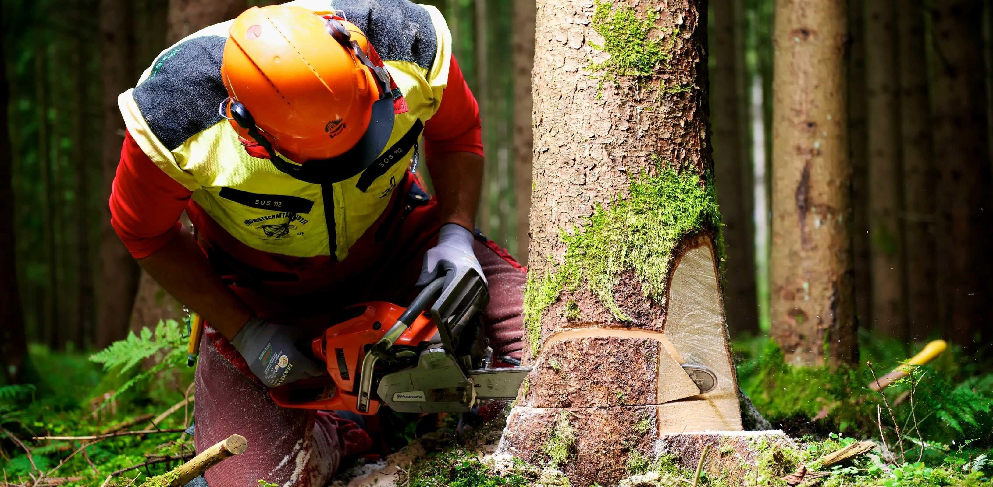 Vi arbetar som trädfällare i Norrort