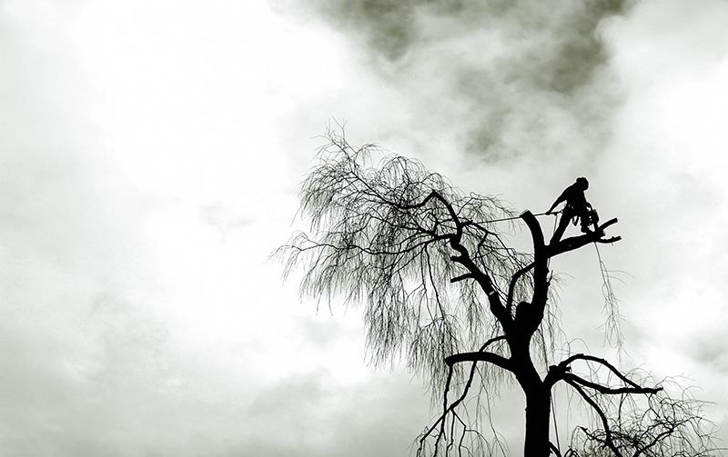 Arborist i motljus