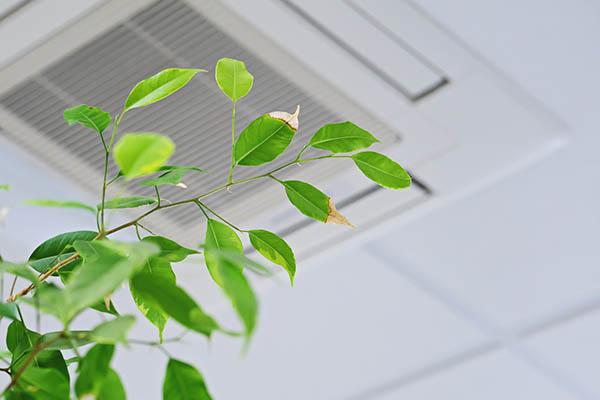 ventilation stockholm växt