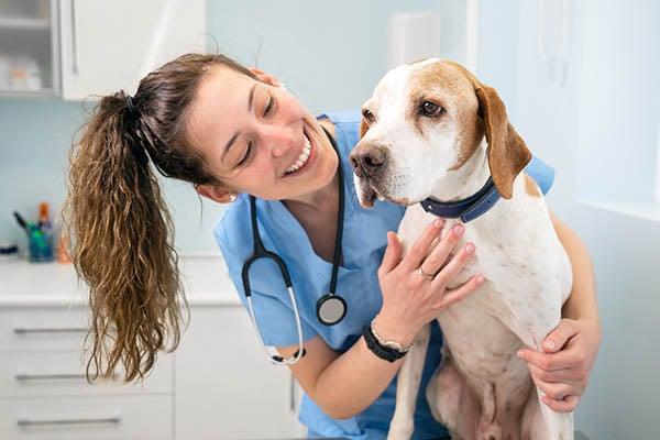 erfaren personal veterinärer Stockholm
