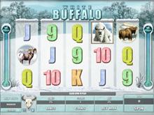 White Buffalo Video Slot